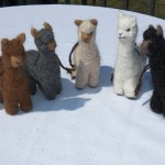 alpacas & clothing 2013 070