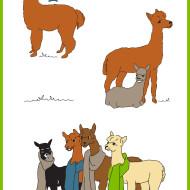 Depler-Alpaca-Towel3